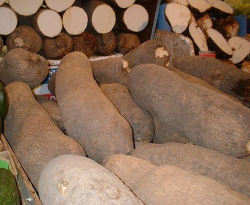 Yam Tubers(6 Pieces)