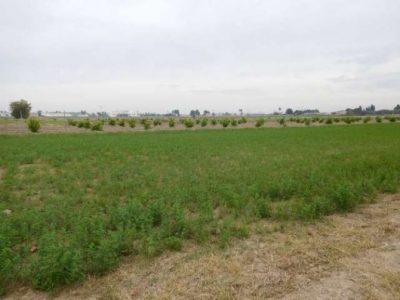 2 plots of Land for shot let