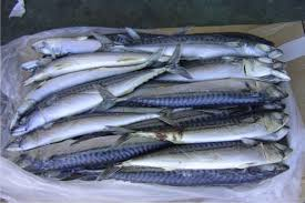 salmon Titus fish 1kg