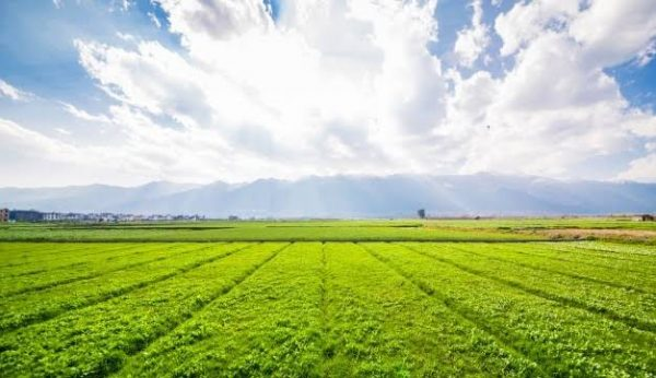 Agric land For sale in Owode Egba